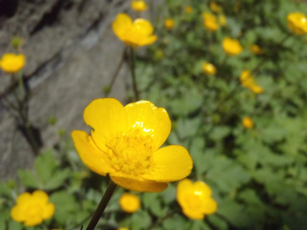 photo1975_8
