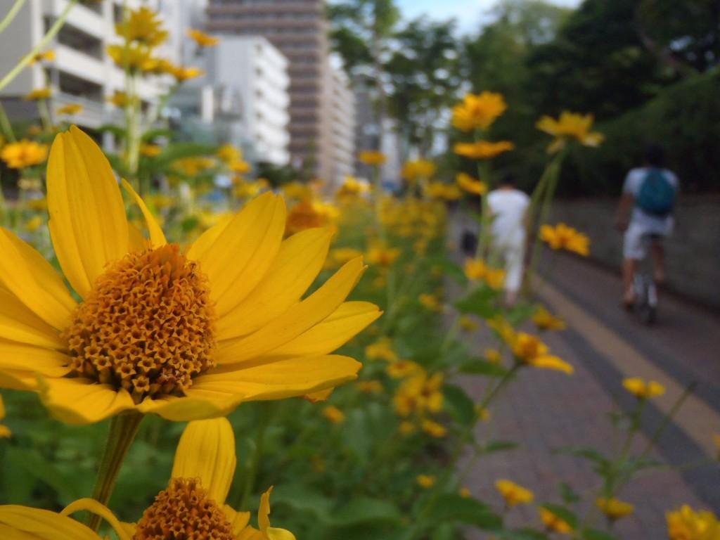 photo2232_5