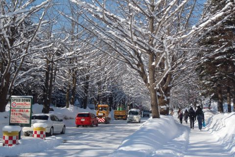 北大散歩♪~冬~