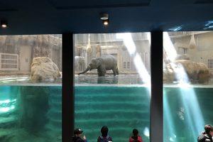 ゾウに会いに円山動物園に行ってみた